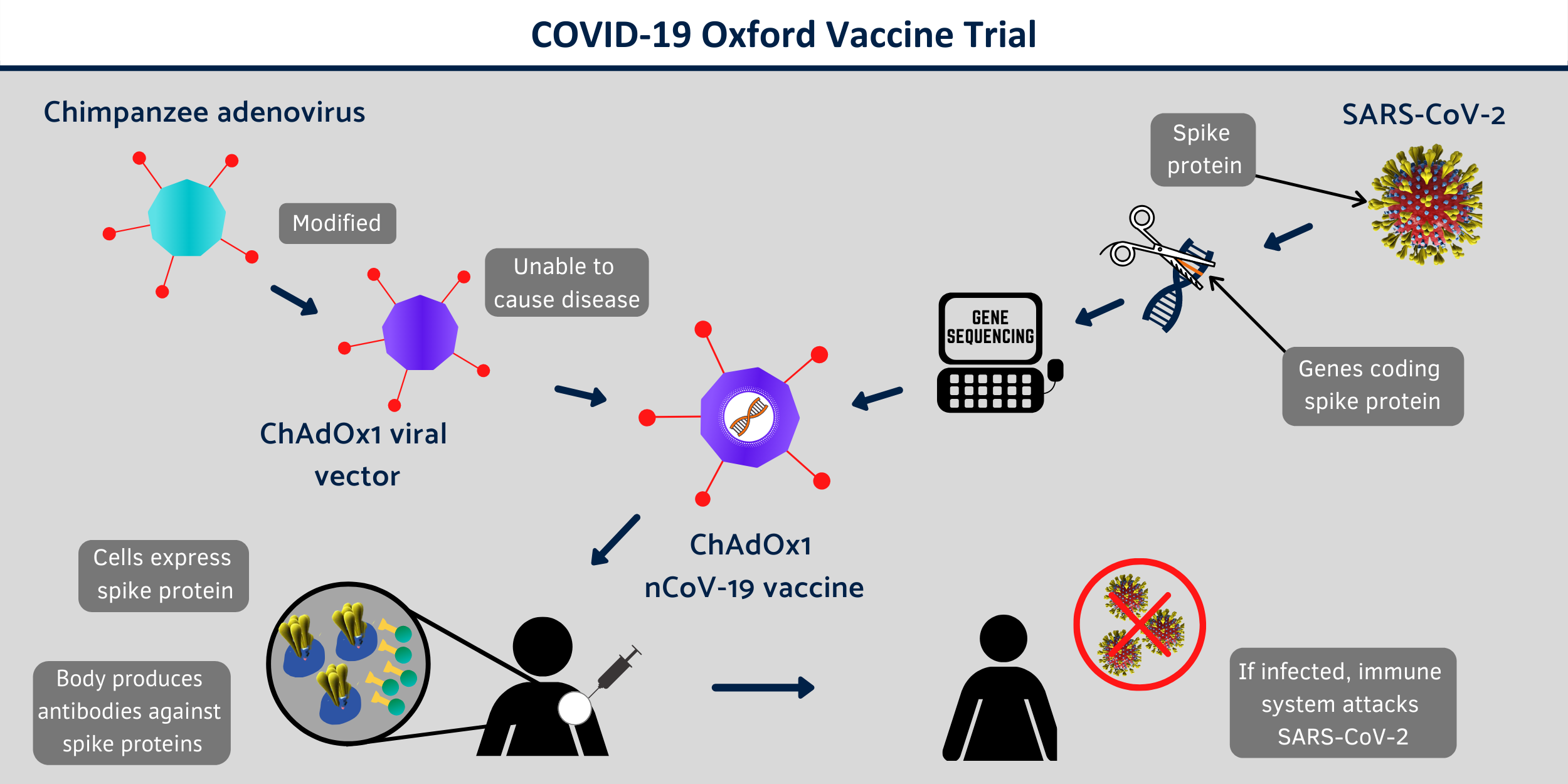 covid 19 vaccine infographic 3